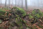 Fog Stock 07