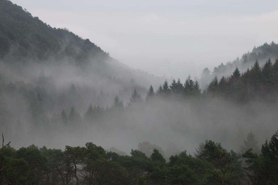 Fog Stock 05