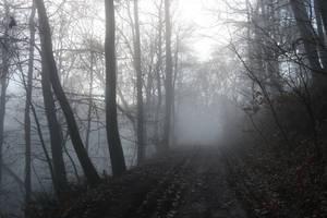 Fog Stock 20 by Malleni-Stock