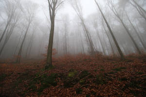 Fog Stock 30 by Malleni-Stock