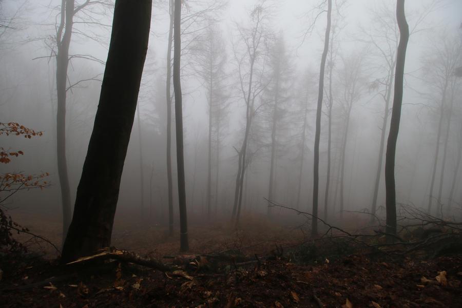 Fog Stock 37 by Malleni-Stock