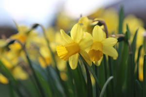 Spring Stock 53 by Malleni-Stock
