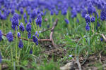 Stock Challenge: Spring