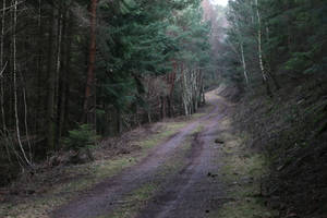 Forest Stock 125 by Malleni-Stock