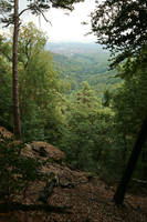 Forest Stock 150 by Malleni-Stock