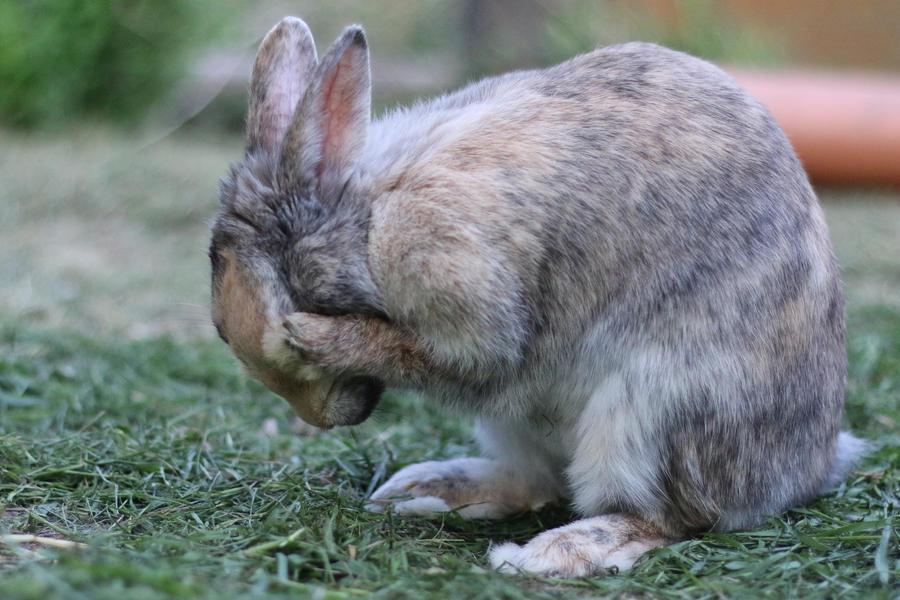 Rabbit Stock 10 by Malleni-Stock