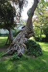 Jardin du Luxembourg Stock 07
