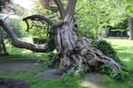 Jardin du Luxembourg Stock 11 by Malleni-Stock