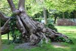 Jardin du Luxembourg Stock 10