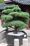 Chinese  garden Stock 080