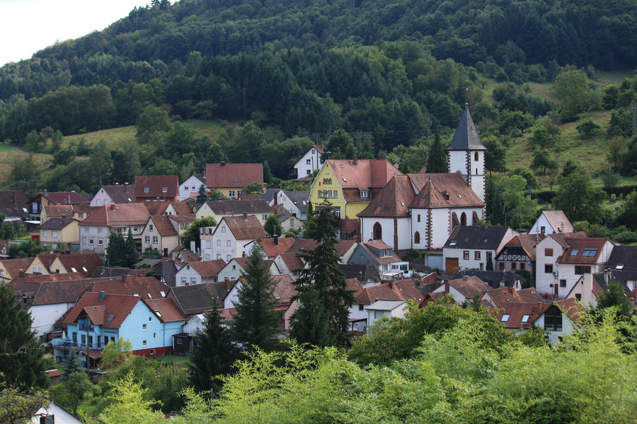 Palatinate Forest Stock 02