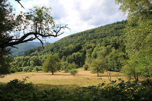 Palatinate Forest Stock 06 by Malleni-Stock