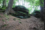 Palatinate Forest Stock 10