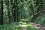 Palatinate Forest Stock 13