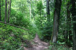 Palatinate Forest Stock 14