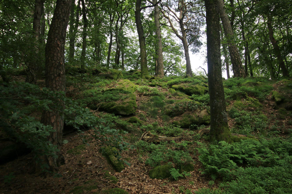 Palatinate Forest Stock 18