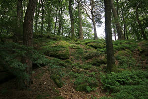 Palatinate Forest Stock 18 by Malleni-Stock