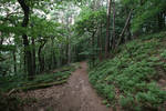 Palatinate Forest Stock 19 by Malleni-Stock
