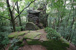 Palatinate Forest Stock 20