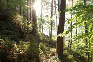 Palatinate Forest Stock 44 by Malleni-Stock