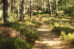 Palatinate Forest Stock 61