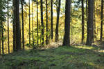 Palatinate Forest Stock 66