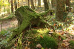 Palatinate Forest Stock 73