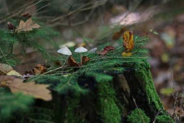 Mushroom Stock 11 by Malleni-Stock