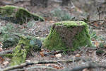 Palatinate forest Stock 79