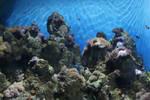 Aquarium Stock 81 (private use)