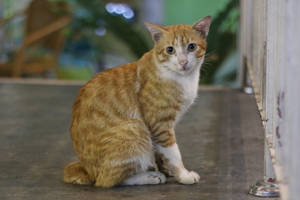 Cat Stock 131 by Malleni-Stock