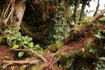 Mossy forest Stock 16