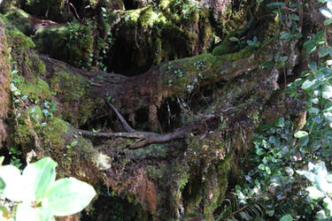 Mossy forest Stock 14