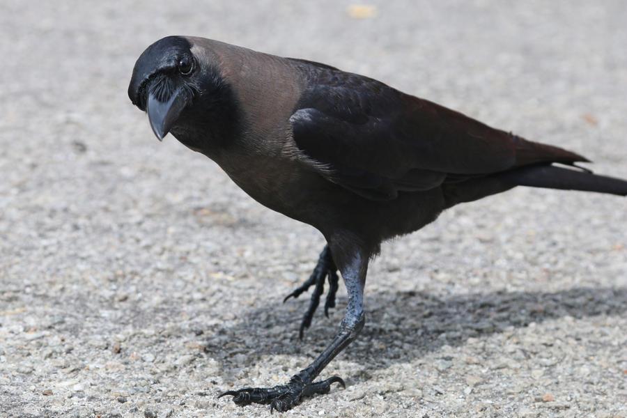Bird Stock 149 by Malleni-Stock