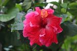Flower Stock 43