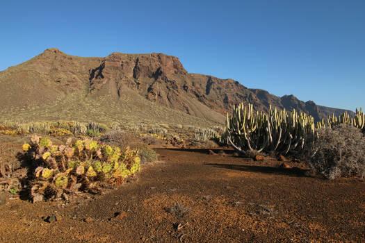 Tenerife Stock 035