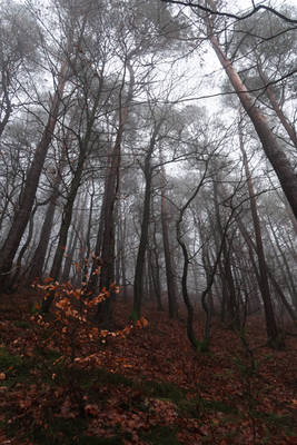 Palatinate Forest Stock 89
