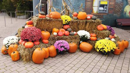 Pumpkin Stock 15