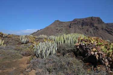 Tenerife Stock 385