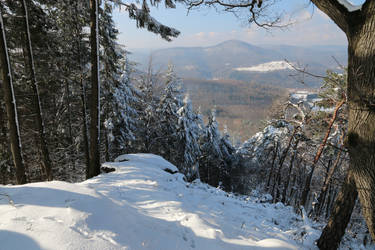 Palatinate Forest Stock 103