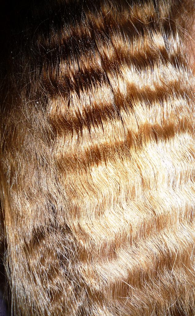 Crimped Hair by Renire-Stock