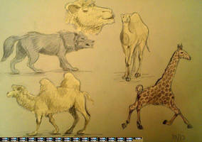 camel by Maltakreuz
