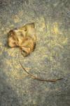 a leaf by HannahCombs