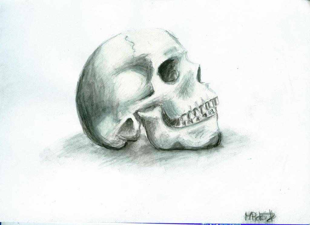 Skull by BlackMonk13