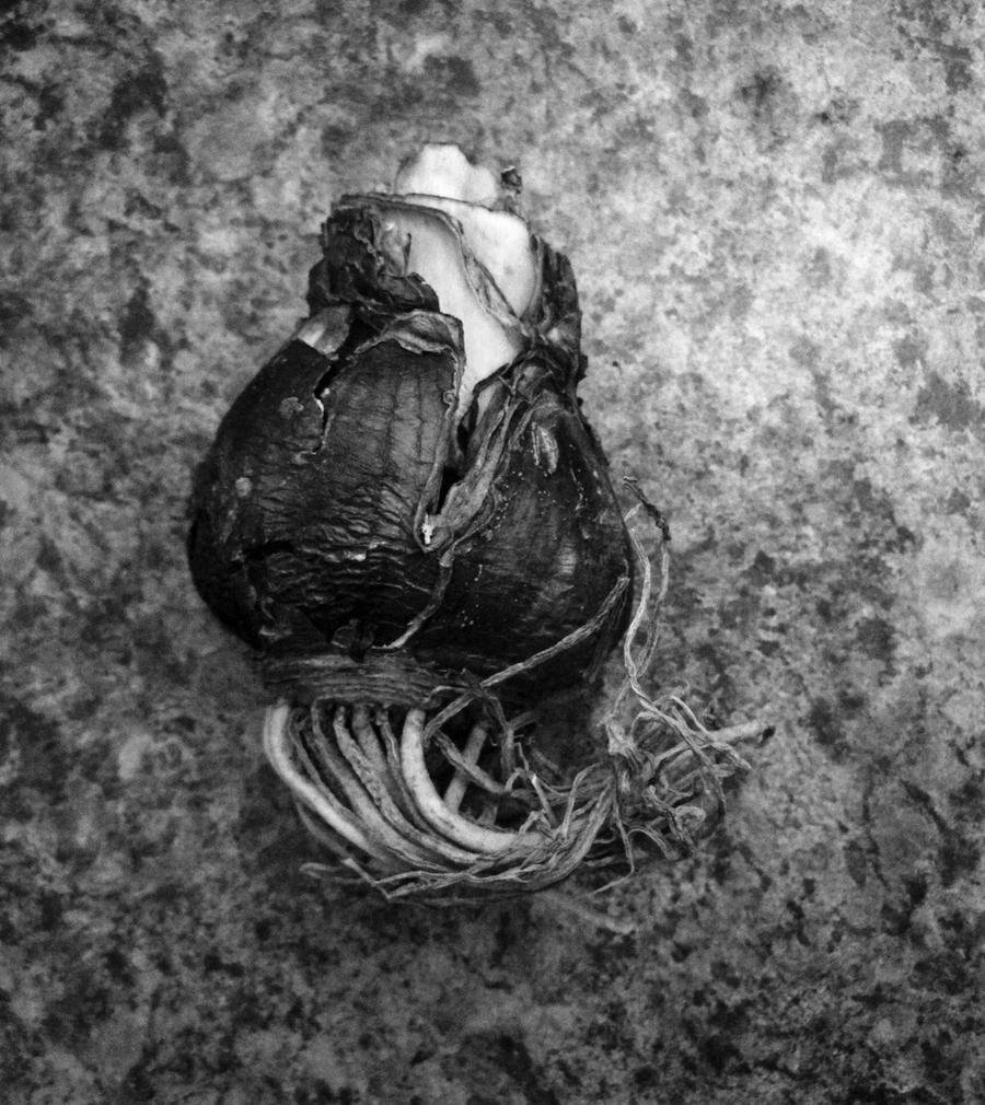 Bulb by SilverDragon2050