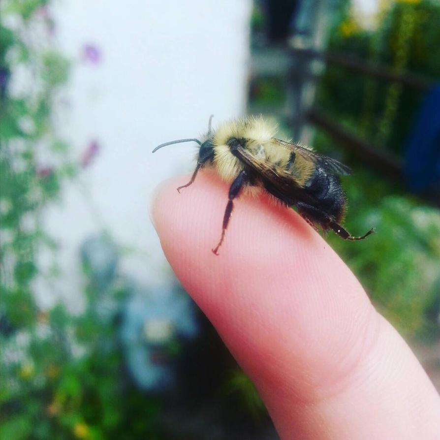 Little Bee by SilverDragon2050