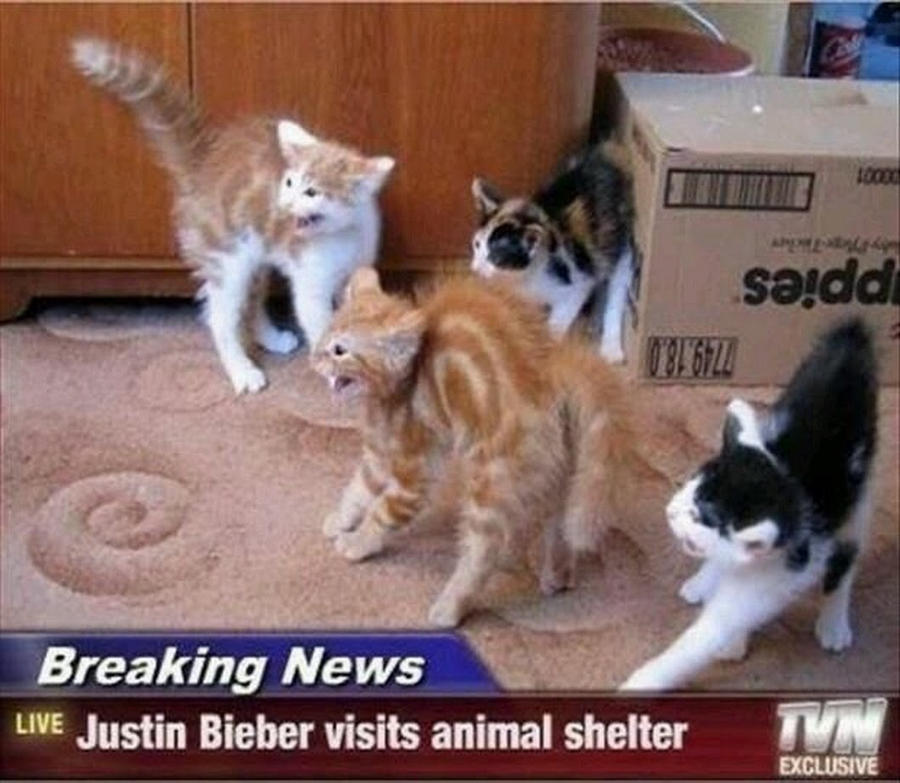 When JB visits animal shelter by isuckatGTA