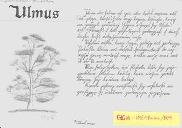 Encyclopaedia Mahirica - Ulmus by MahiraCZ