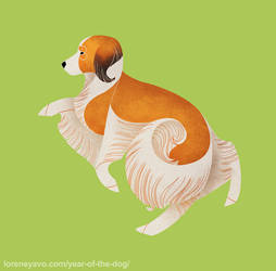 Year of the Dog - Kooikerhondje by Kelgrid