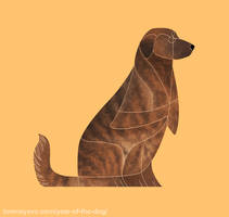 Year of the Dog - Cao de Castro Laboreiro by Kelgrid
